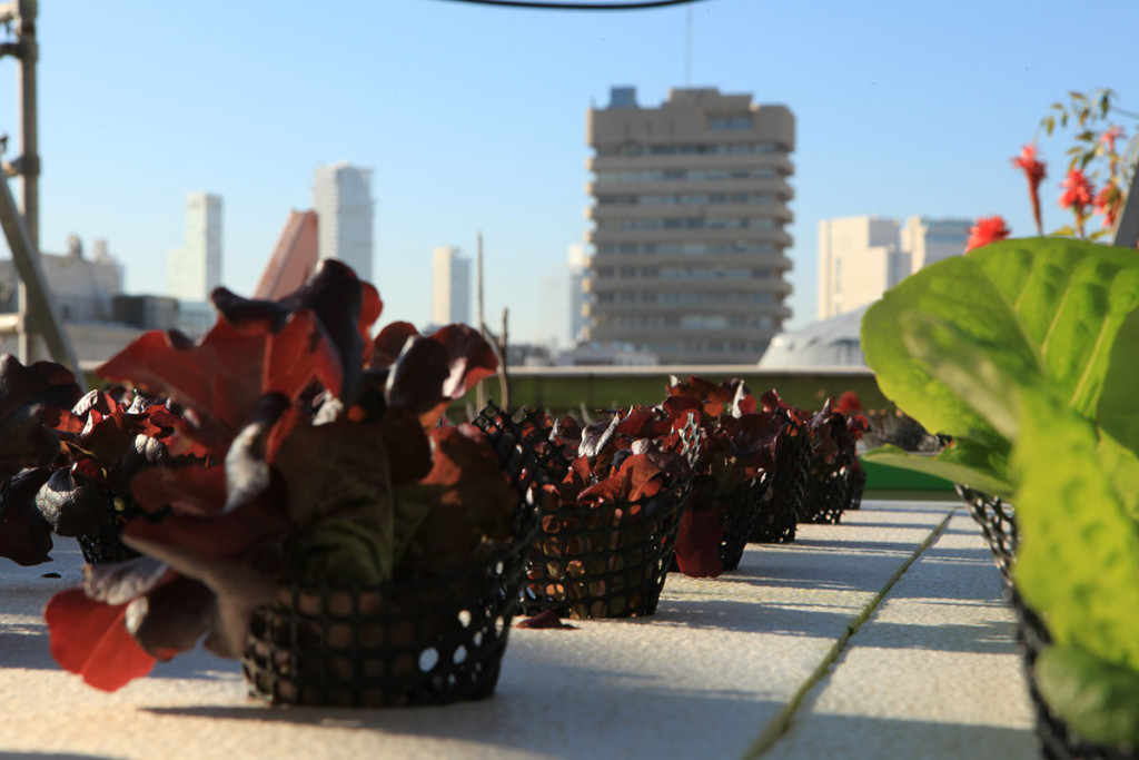 The first eco-friendly shopping centre in Israel |The Switchers