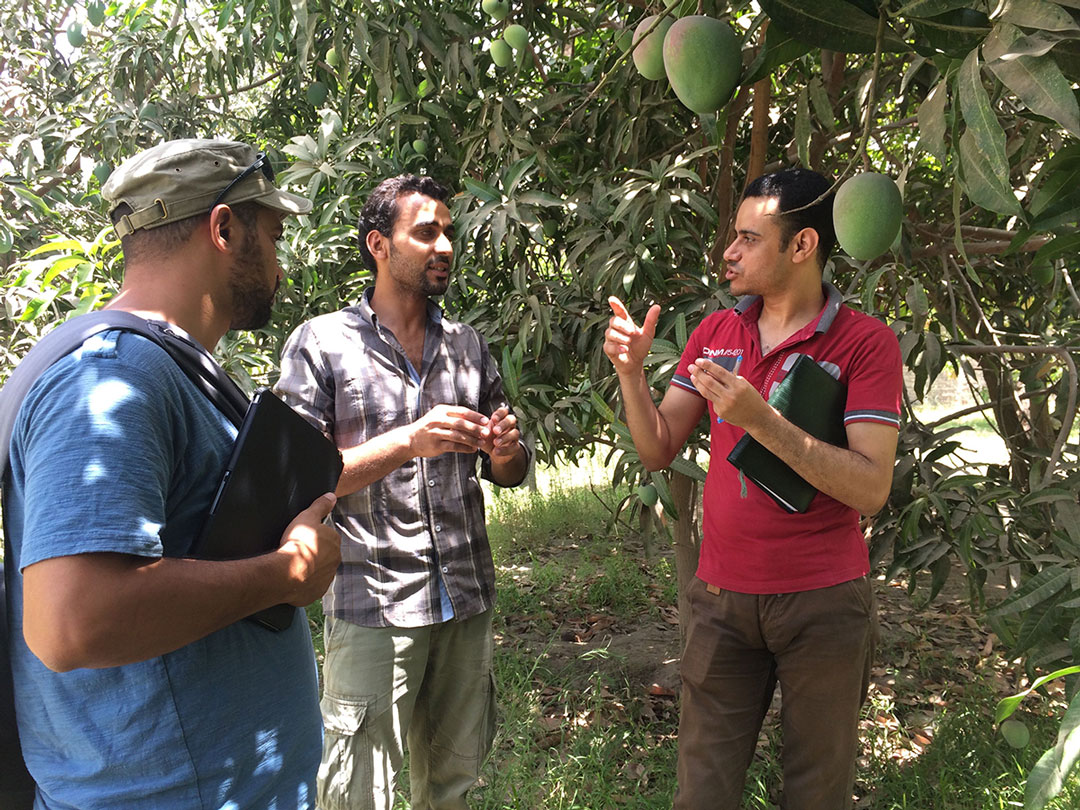 Towards sustainable agricultural practices in Egypt | The Switchers