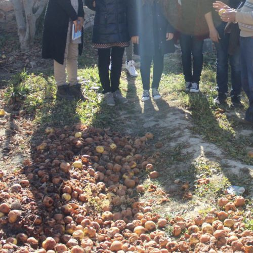 Food waste of apples taken at the farm of Hicham and Mouhcine, the two apple growers.