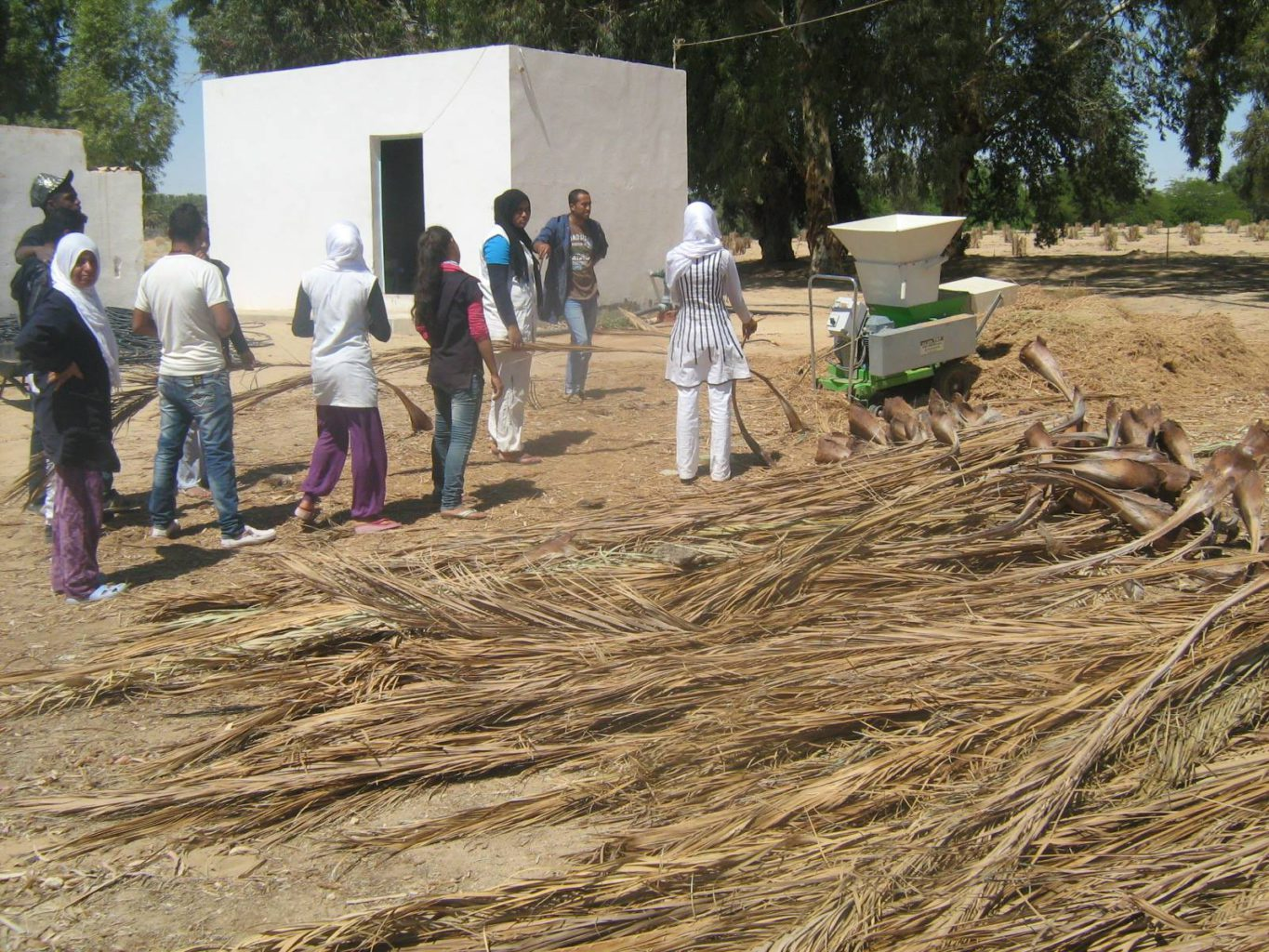A new venture is turning palm tree waste into fertilizers |The Switchers