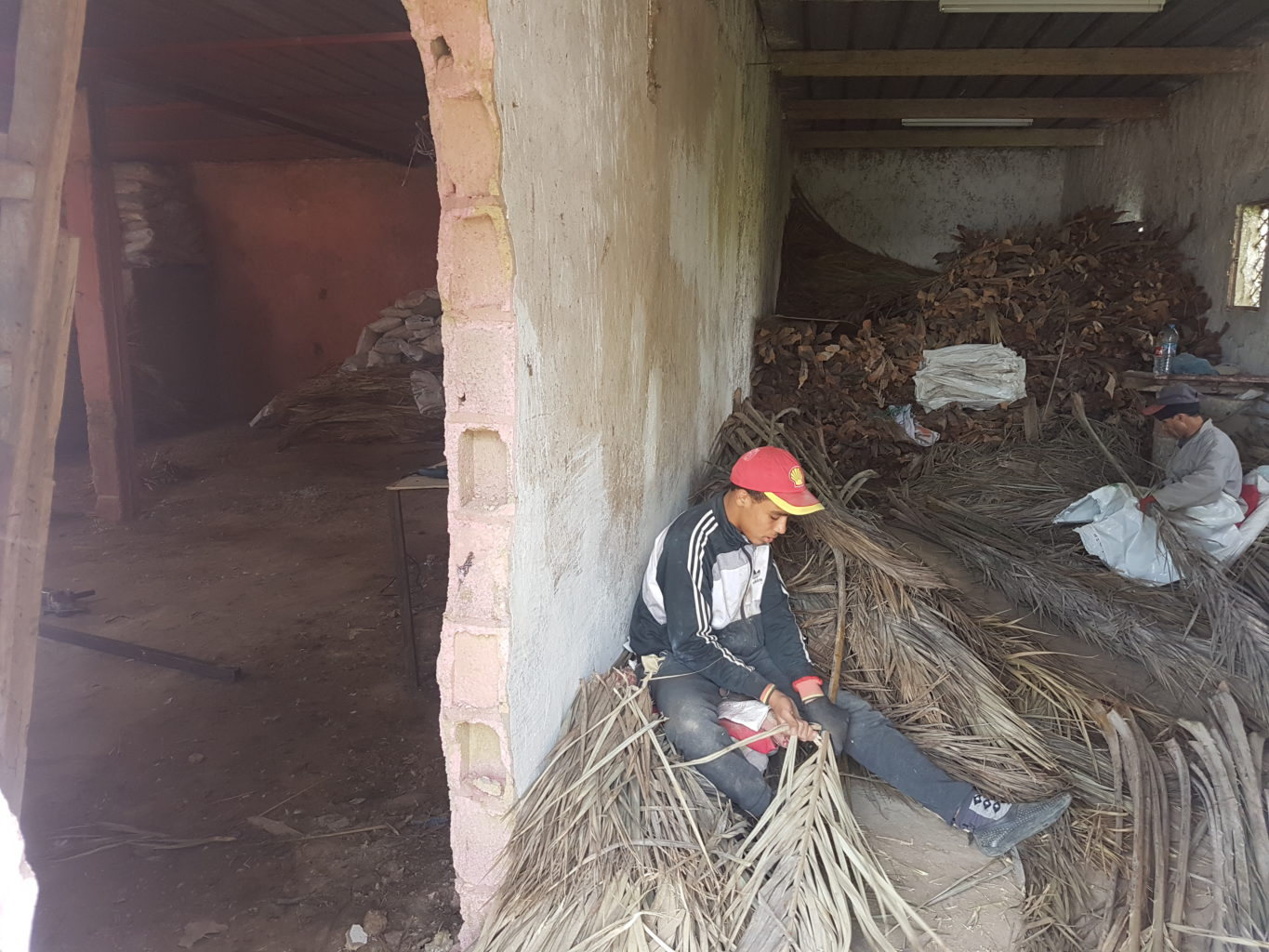 Young Moroccan entrepreneurs give new life to palm waste |The Switchers