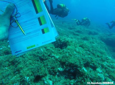 The first assessment of the coral off the coast of Mallorca as part of SUBMON's WildSea Divers program