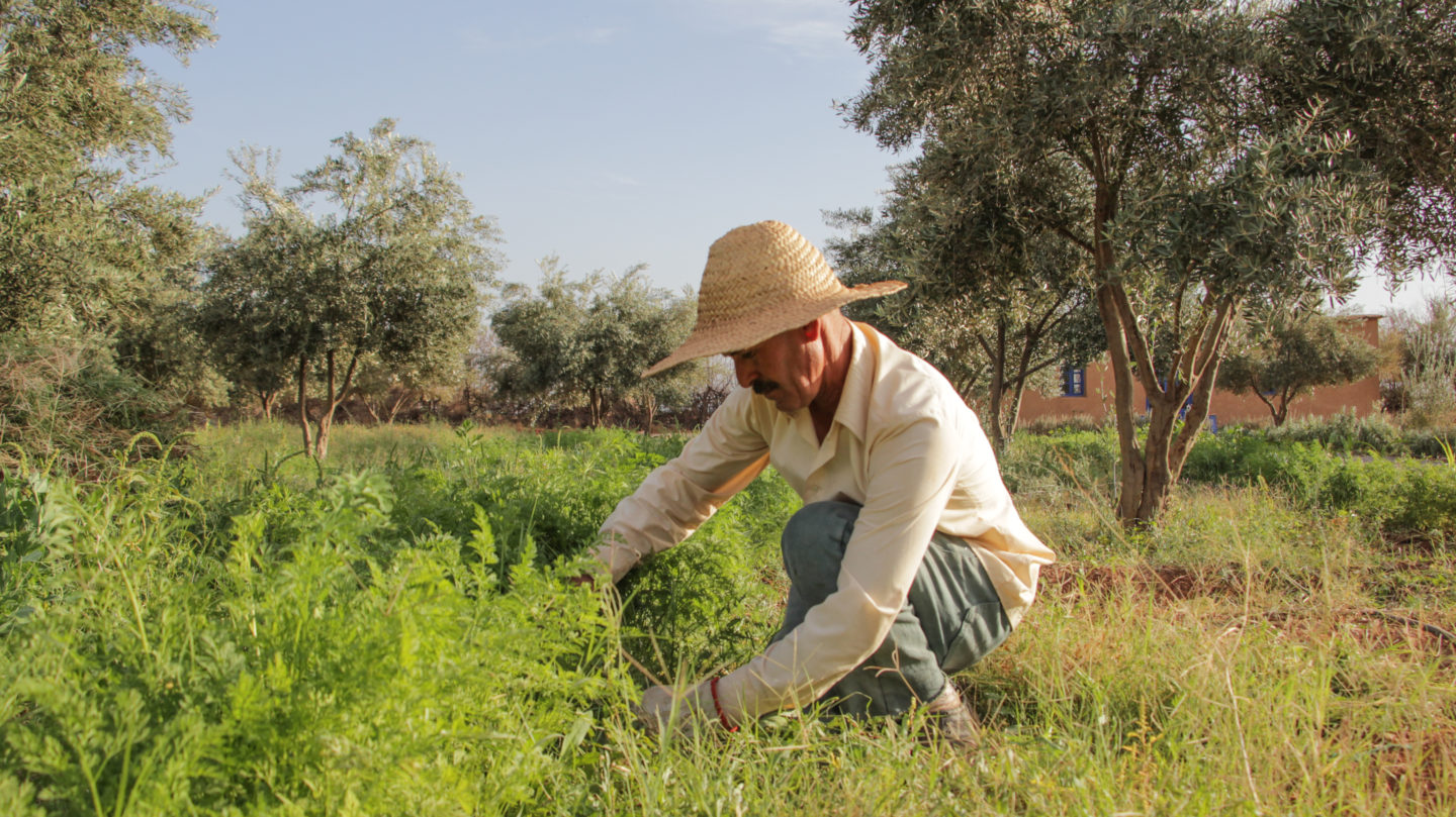 """Adopting global innovations to create the """"farm of the future"""" 