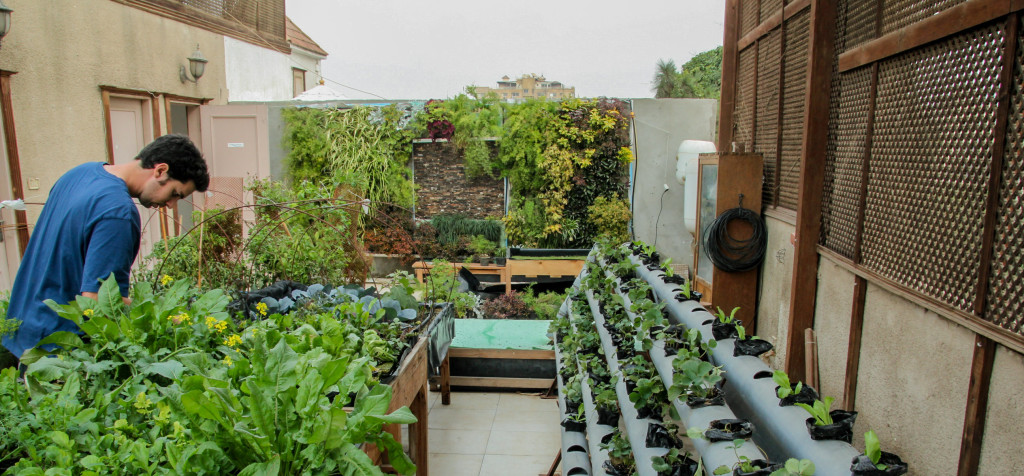Sustainable vegetable gardens green Cairo's rooftops | The Switchers