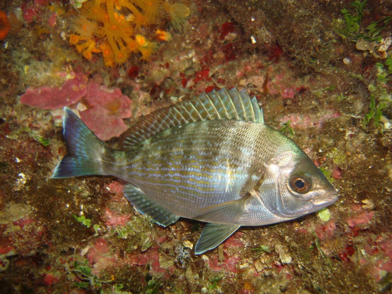 Pêche durable et conservation de l'Île Plane  The Switchers