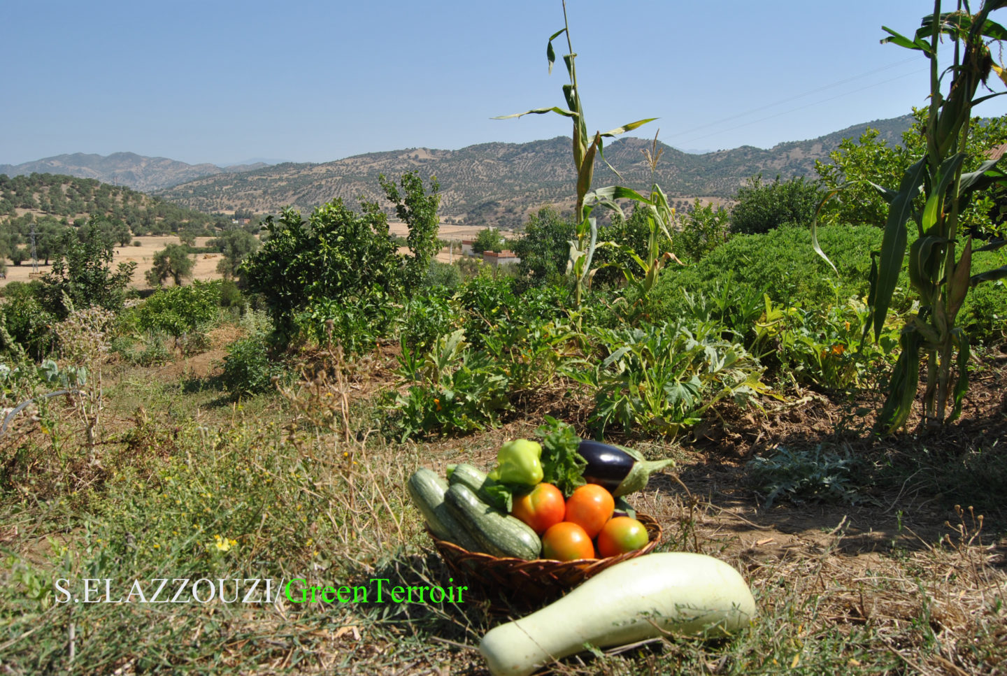 In Morocco, the valleys bridge gap for agritourism | The Switchers