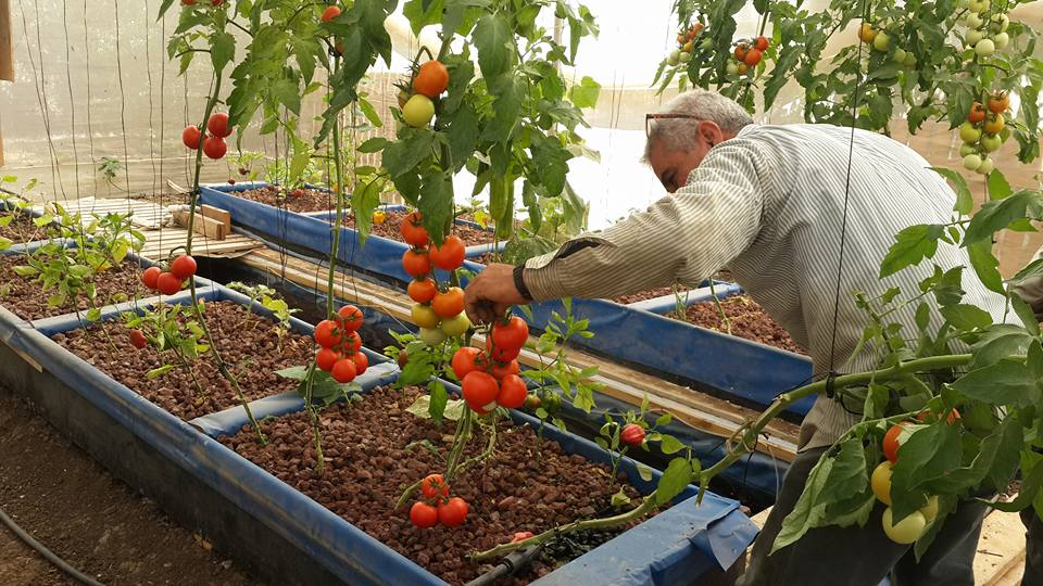Permaculture practice strengthens roots in Palestine | The Switchers