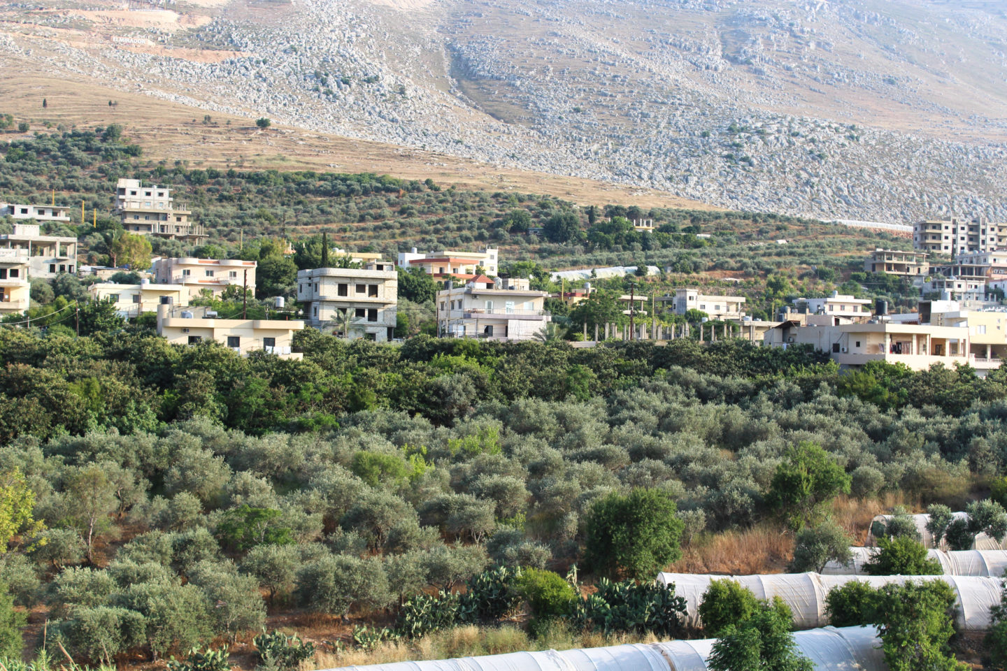 A rural food revolution is growing in Lebanon's olive groves | The Switchers