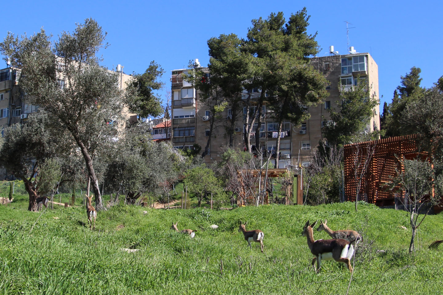 In urban wildlife sites, nature and people learn to coexist in a city setting | The Switchers