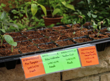 Aquaponics allows more water demanding plants, such as melons, to again grow in Palestine
