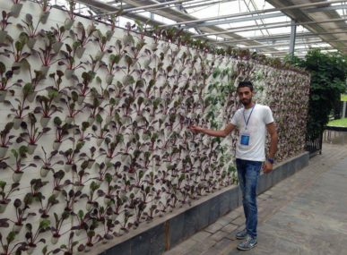 H2O Farm founder Basel Amarna with a vertical wall hydroponics system