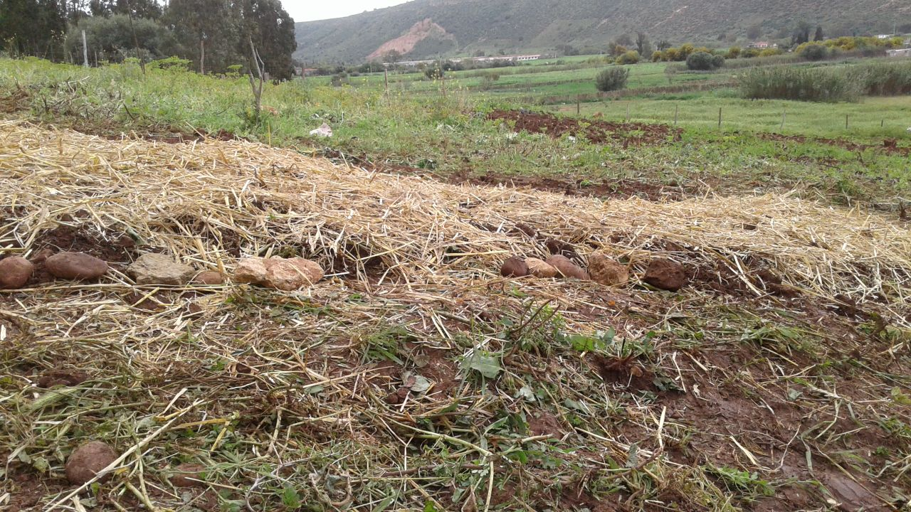 This Moroccan initiative wants to turn swathes of unusable lands to arable soil | The Switchers