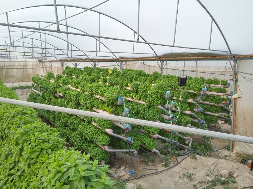 The Palestinian agripreneur using hydroponics to grow agricultural resilience in the West Bank | The Switchers