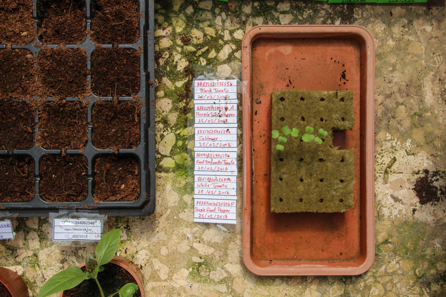 Overcoming Palestine's environmental and political challenges with aquaponics | The Switchers