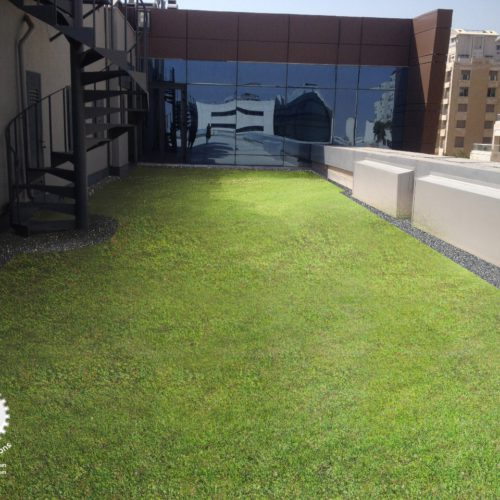 An example of what a Lina Energy green roof could look like