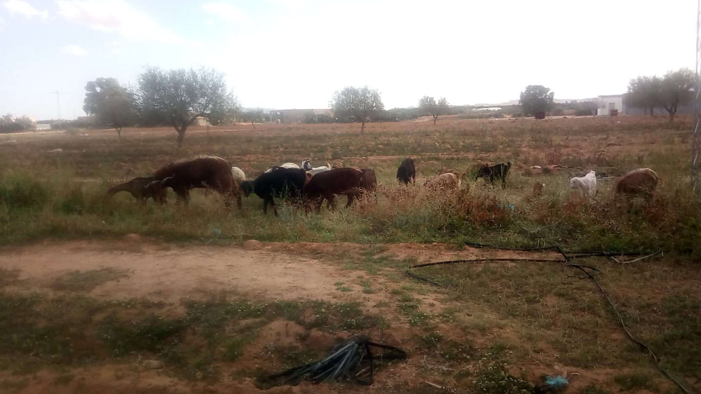 Crossbreeding and animal welfare while aiding society's most vulnerable |The Switchers