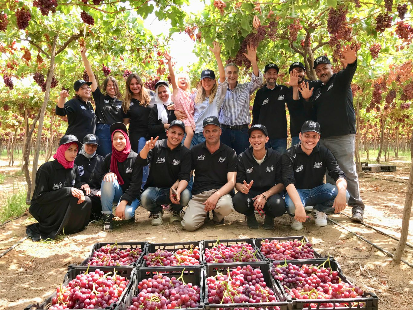 Organic farm loads up Egyptian plates with healthy fruit and vegetables | The Switchers