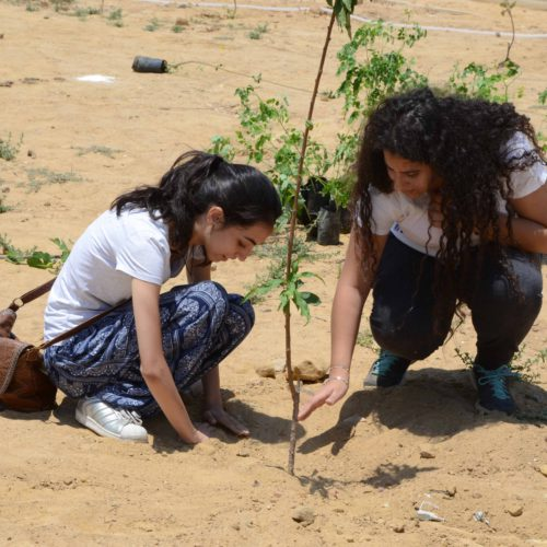 Shagrha receives help with its mission of planting thousands of trees in Egypt from volunteers