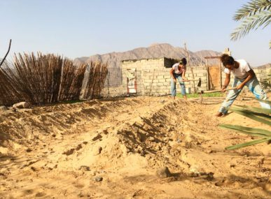 Volunteers come to Nuweiba and do rewarding work at Habiba's Organic Farm