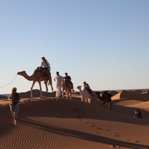 Discover the Sahara with the local population | The Switchers