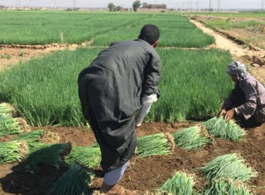 Union for Agricultural Development sees enormous potential in creating organic fertilizers from Egypt's mountains of food scraps.