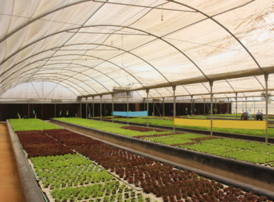 Bustan Aquaponics believes that aquaponics, the practice of harvesting fish and plants in a symbiotic way, can help to address food insecurity in Egypt.