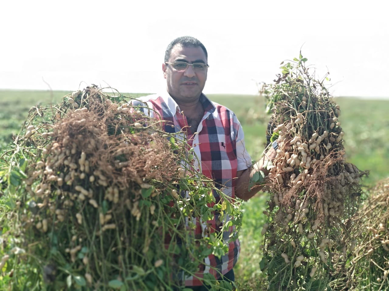 Egyptian Switcher Union for Agricultural Development has developed an organic pesticide that safely protects crops |The Switchers