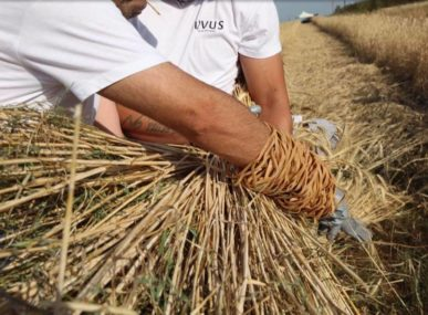 Staramaki is a social enterprise cooperative that produces wheat-based, eco-friendly drinking straws and provides much-needed jobs in rural Greece.
